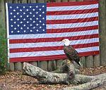 Patriotic Bird.